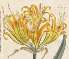 THE ARTFUL MIND, March 2013: BIRDS, BUGS, & BOTANY