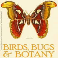 THE ARTFUL MIND JUNE 2013: BIRDS, BUGS, & BOTANY