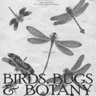 THE ARTFUL MIND September 2013: BIRDS, BUGS, & BOTANY